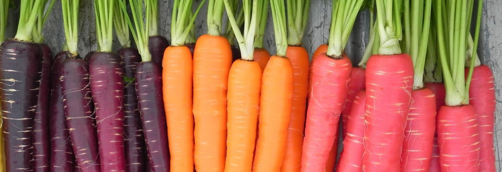 You are currently viewing Complete line of carrot puree